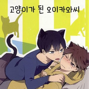 [Shounen-H (Yuuki)] Neko ni Natta Oikawa-san – Haikyuu!! dj [kr] – Gay Comics